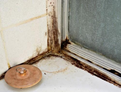 Moldy Bathroom